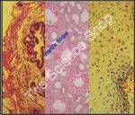 Epethelium Composite (sect) Stratified squamous columnar and cuboidal on one slide H and E