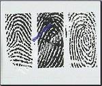 Fingerprints 3 types (wm) Examples of whorl loop and arch on one slide