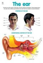 The Ear - Poster