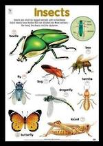 Insects - Poster